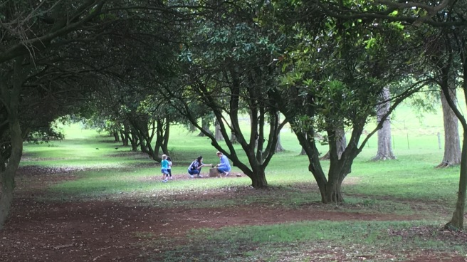 Macadamia and Pecan Orchard